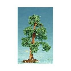 borovice pf (výška cca 4cm)