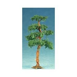 borovice pf (výška cca 7cm)