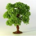 List. strom L-pf